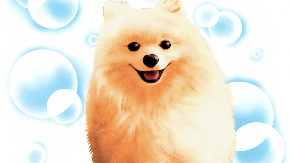 dog02-1216x684