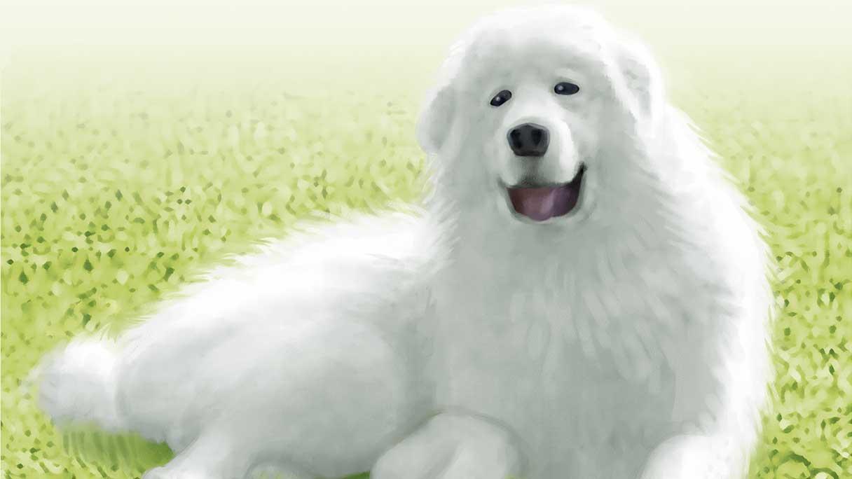 dog03-1216x684