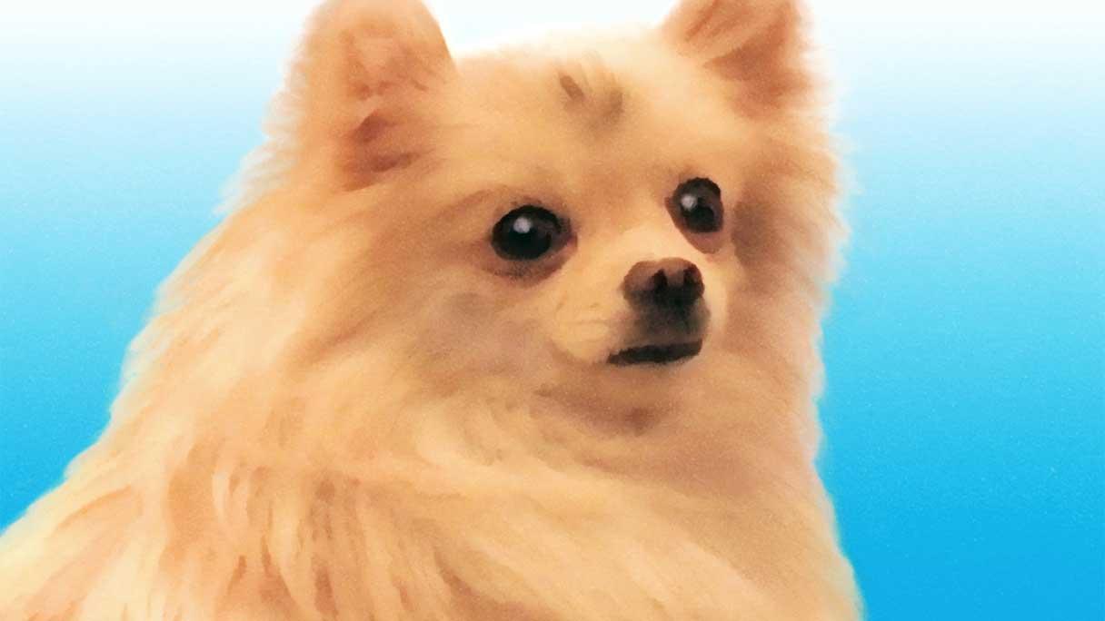 dog04-1216x684