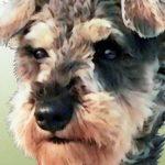 dog05-1216x684