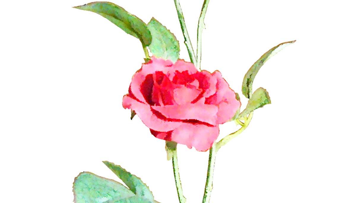 flower01-1216x684