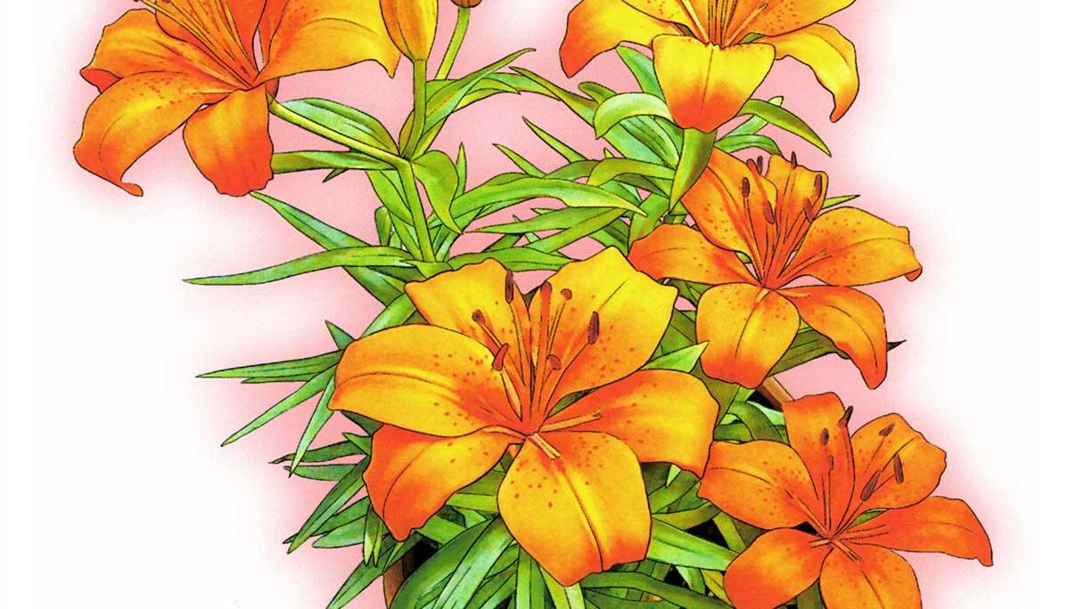 flower02-1216x684